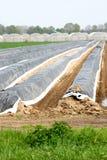 Zone hollandaise de ferme et d'asperge photographie stock libre de droits