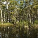 Zone humide dans des marais de la Floride. Images libres de droits