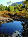Zone humide de désert Image libre de droits