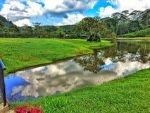 Zone humide verte Image libre de droits