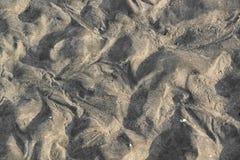 Zone intertidale image libre de droits