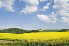 Zone jaune Photos libres de droits