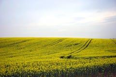 Zone jaune Photo libre de droits