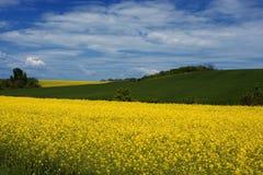 Zone jaune de viol Image libre de droits
