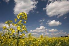 Zone jaune et le ciel bleu Photographie stock libre de droits