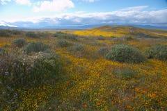 Zone Lanscape de pavot Photo libre de droits