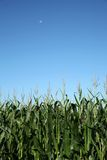 Zone, lune et ciel de maïs photographie stock libre de droits