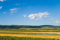 Zone mélangée de légumes Photos libres de droits