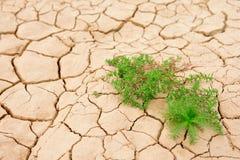 Zone sèche de boue Photographie stock