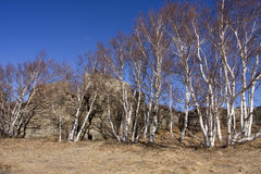 Zone scénique de forêt en pierre d'Arshihaty photo stock