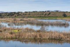 Zone umide connesse con de River Guadiana Fotografie Stock