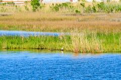 Zone umide del ramo paludoso di fiume della Luisiana fotografia stock libera da diritti