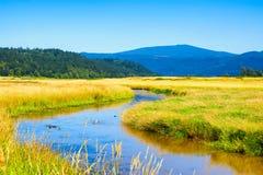 Zone umide della riserva del cittadino del lago Steigerwald fotografia stock