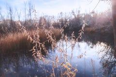 Zone umide della riva del fiume al tramonto nei quattro angoli Immagini Stock Libere da Diritti