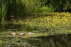 Zone umide di fioritura sulle periferie di Praga Fotografie Stock Libere da Diritti