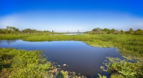 Zone umide di Florida fotografie stock libere da diritti