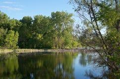 Zone umide e legno di legno del parco del lago Immagini Stock Libere da Diritti