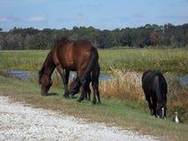 Zone umide Gainesville Florida di Sweetwater dei cavalli selvaggii fotografia stock