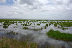 Zone umide in Gannan Fotografia Stock