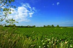 Zone verte photographie stock libre de droits
