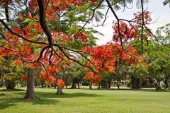 Zone verte au printemps Images stock