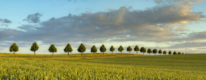 Zone verte au printemps Photographie stock libre de droits