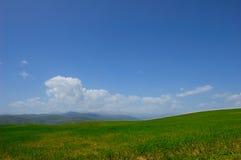 Zone verte avec des fleurs Photo stock