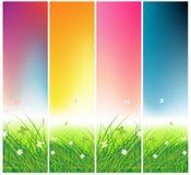 Zone verte avec des guindineaux, heures de jour Photos stock