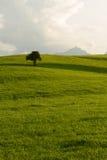 Zone verte avec la crête de montagne d'arbre dans le dos Images libres de droits
