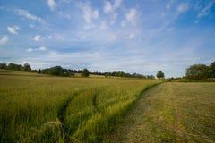 Zone verte avec le ciel bleu Photographie stock