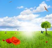 Zone verte avec le pavot image libre de droits