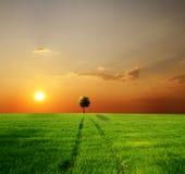 Zone verte et beau coucher du soleil Photo stock