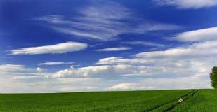 Zone verte et ciel bleu Photos libres de droits