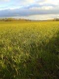 Zone verte et ciel bleu Photographie stock libre de droits