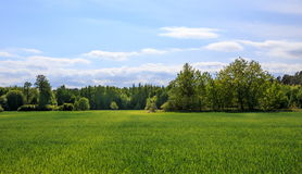 Zone verte et ciel bleu Images stock