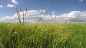 Zone verte et ciel nuageux banque de vidéos