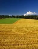 Zone verte et jaune Photographie stock libre de droits