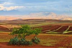 Zones cultivées dans une vallée image libre de droits