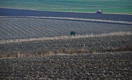 Zones cultivées et un tracto Photo libre de droits