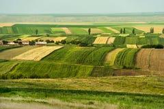 Zones cultivées pendant l'été Photo stock