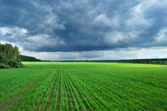 Zones de blé Photographie stock