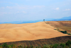 Zones de blé photo libre de droits