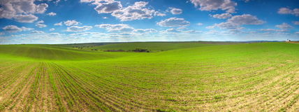 Zones de blé Photographie stock libre de droits