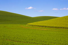 Zones de blé dans le Palouse images stock