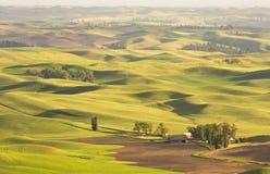 Zones de blé de Palouse Image libre de droits