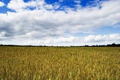 Zones de blé du Shropshire Photos libres de droits