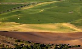 Zones de blé jaunes de vert d'avion Palouse photo libre de droits
