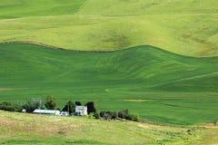 Zones de blé ondulées photo libre de droits