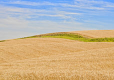 Zones de blé, Palouse Washington images stock