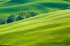 Zones de blé vertes Image libre de droits